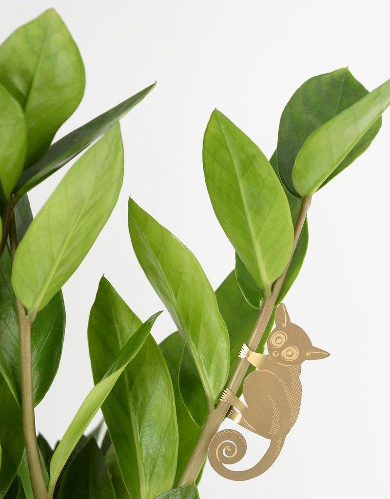 GOLDEN PLANT HANGER - Bush Baby