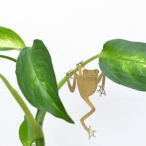 Animaux Spéciaux Botanical Wonders Maranta Fascinator