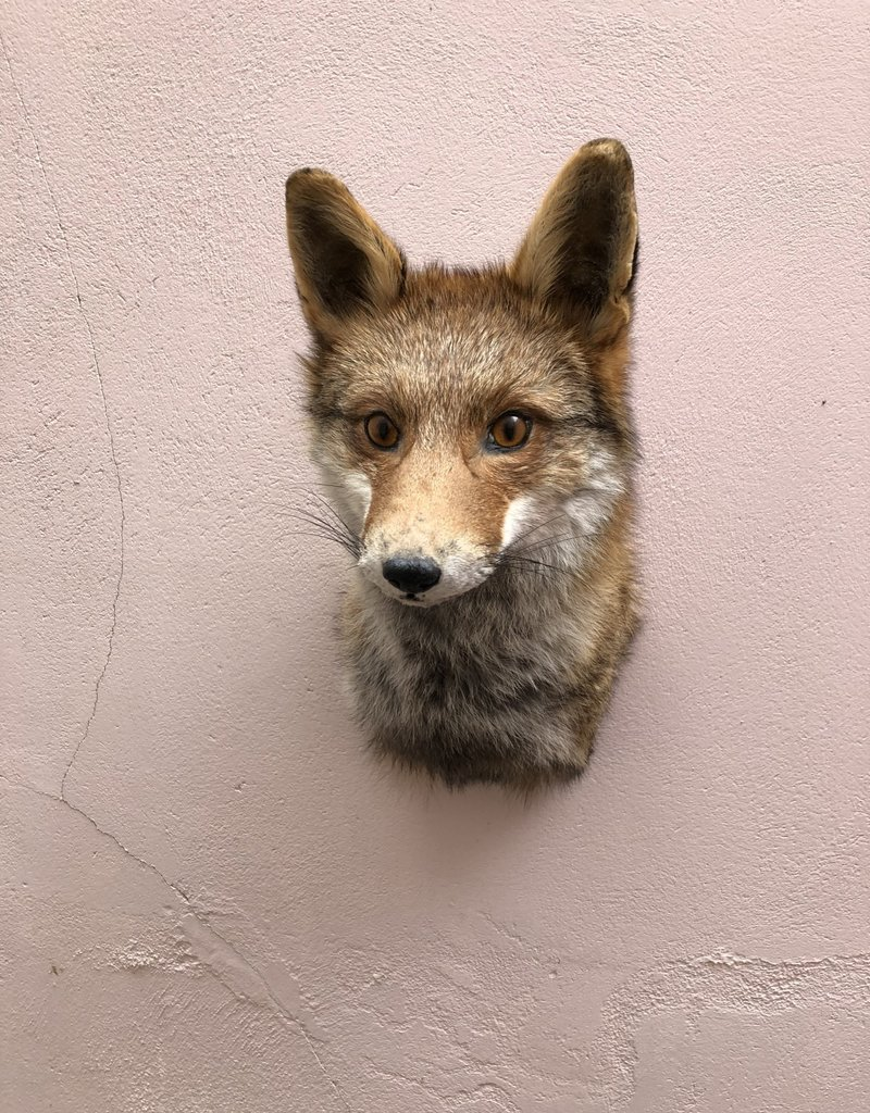 Animaux Spéciaux Fox Head II