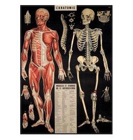AFFICHE VINTAGE - l'Anatomie (50x70cm)