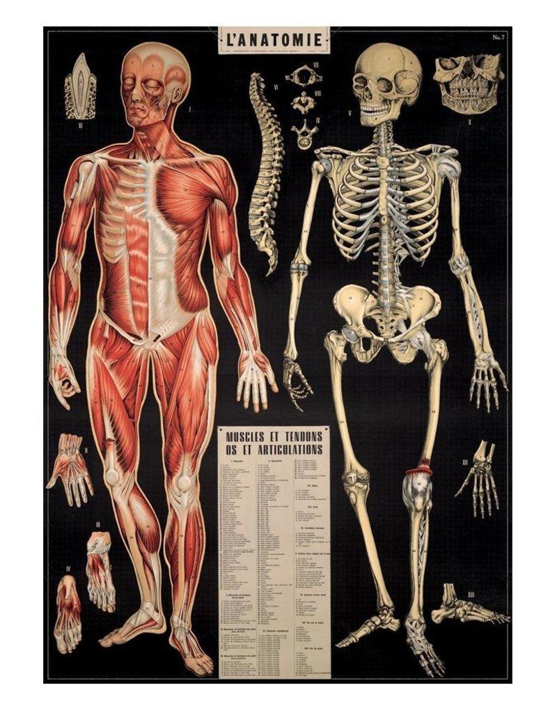 VINTAGE POSTER - l'Anatomie (50x70cm)