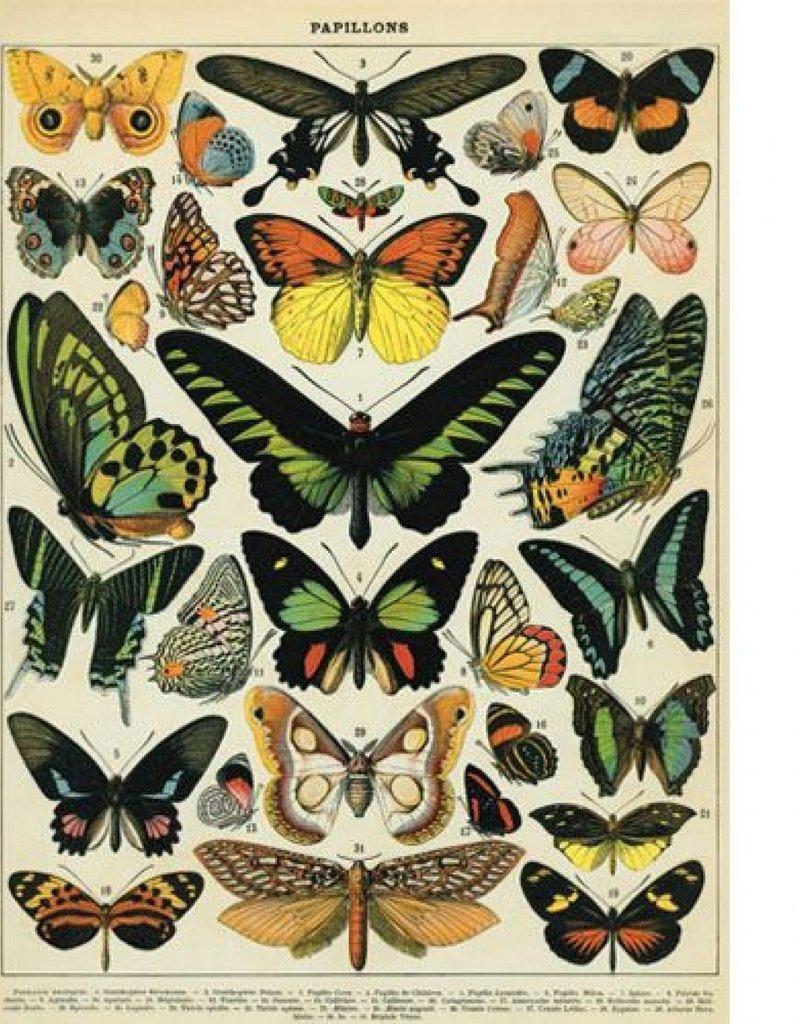 VINTAGE POSTER - Butterflies (50x70cm)