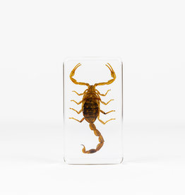 Animaux Spéciaux PRESSE-PAPIER - Scorpion (m)