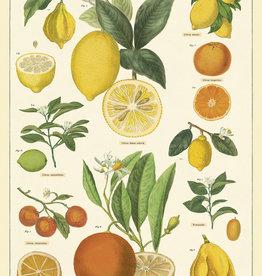 VINTAGE POSTER - Citrus (50x70cm)