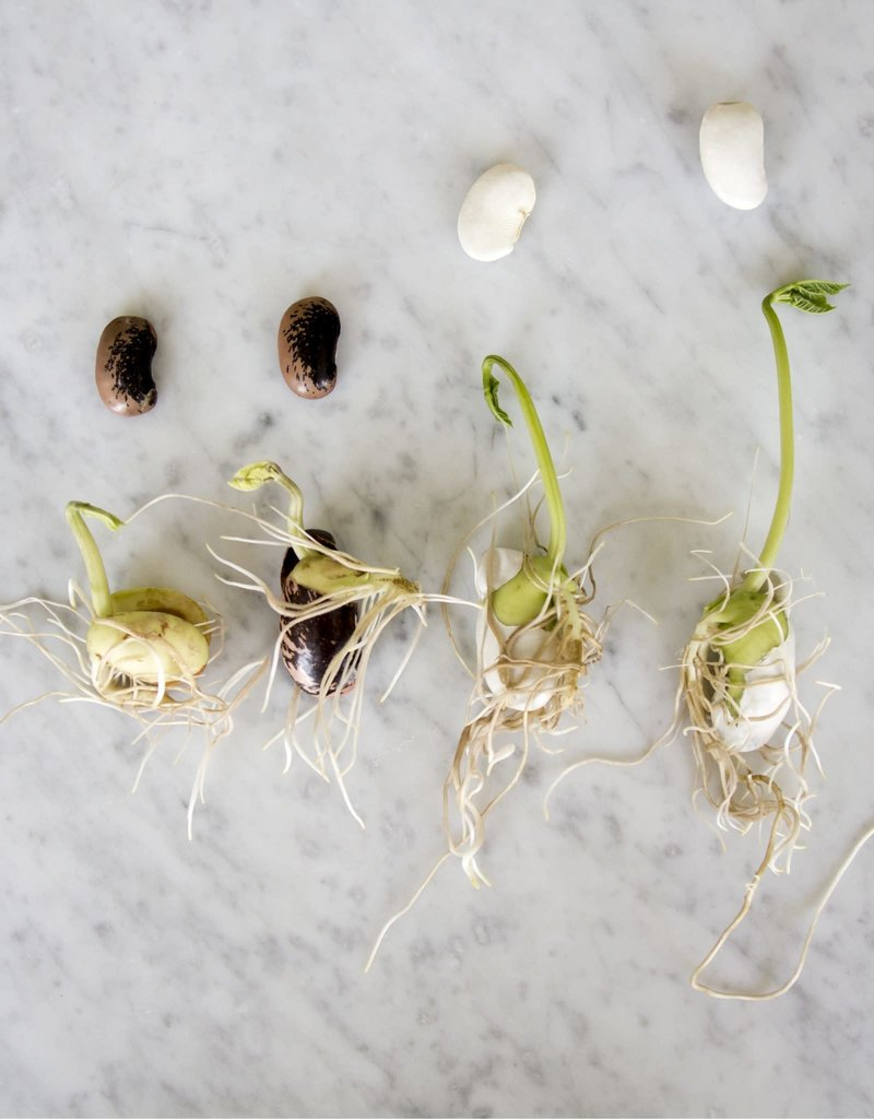 Botanopia Zadenmix voor kweekschaaltje S