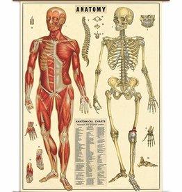 VINTAGE SCHOOLPLAAT - Anatomie (70x100cm)