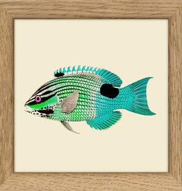 Eiken kader met groen-blauwe vis (10x10cm)