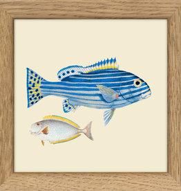 kader met kleine witte vis & grote blauwe vis (10x10cm)
