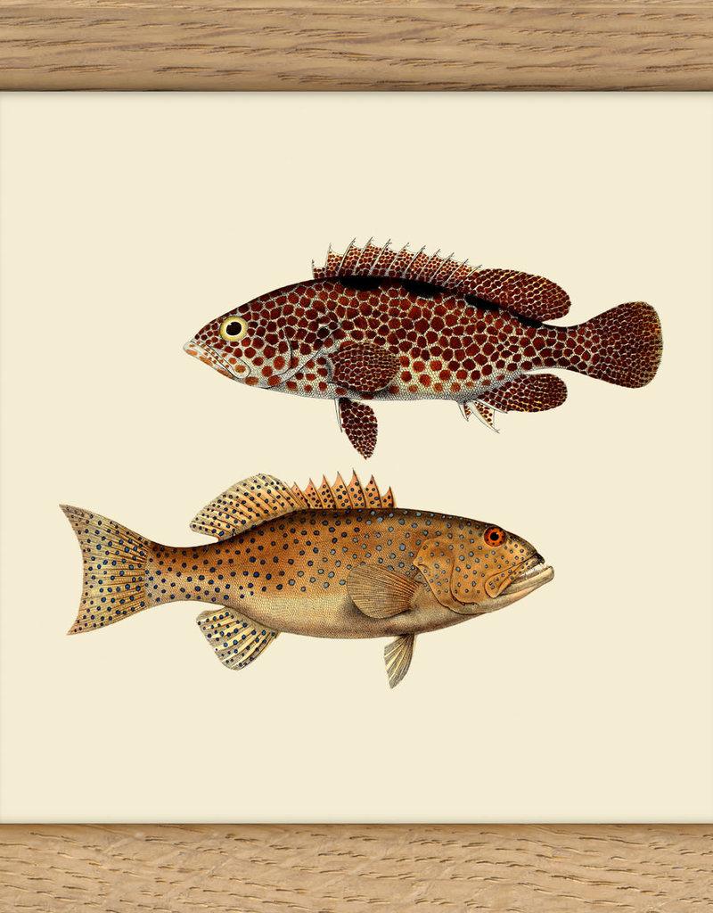 Copy of kader met kleine witte vis & grote blauwe vis (10x10cm)