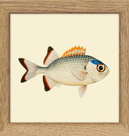 kader met vis (10x10cm)