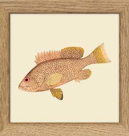 kader met gespikkelde vis (10x10cm)