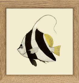 Copy of kader met gespikkelde vis (10x10cm)