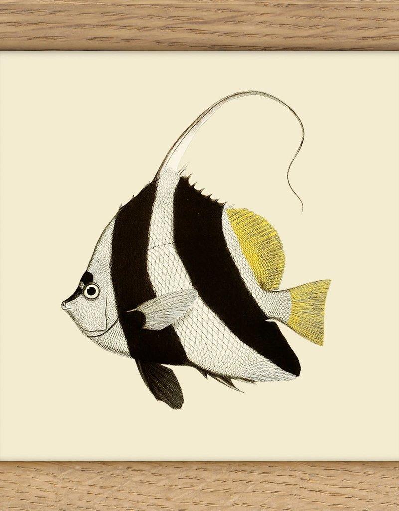 kader met wit-zwart-gele vis (10x10cm)
