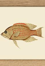 kader met geschubde vis (10x10cm)