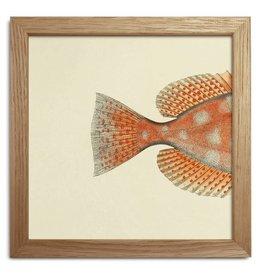 Eiken kader met achterkant oranje vis (15x15cm)