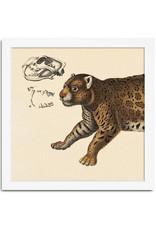 Eiken kader met voorkant tijger (15x15cm)