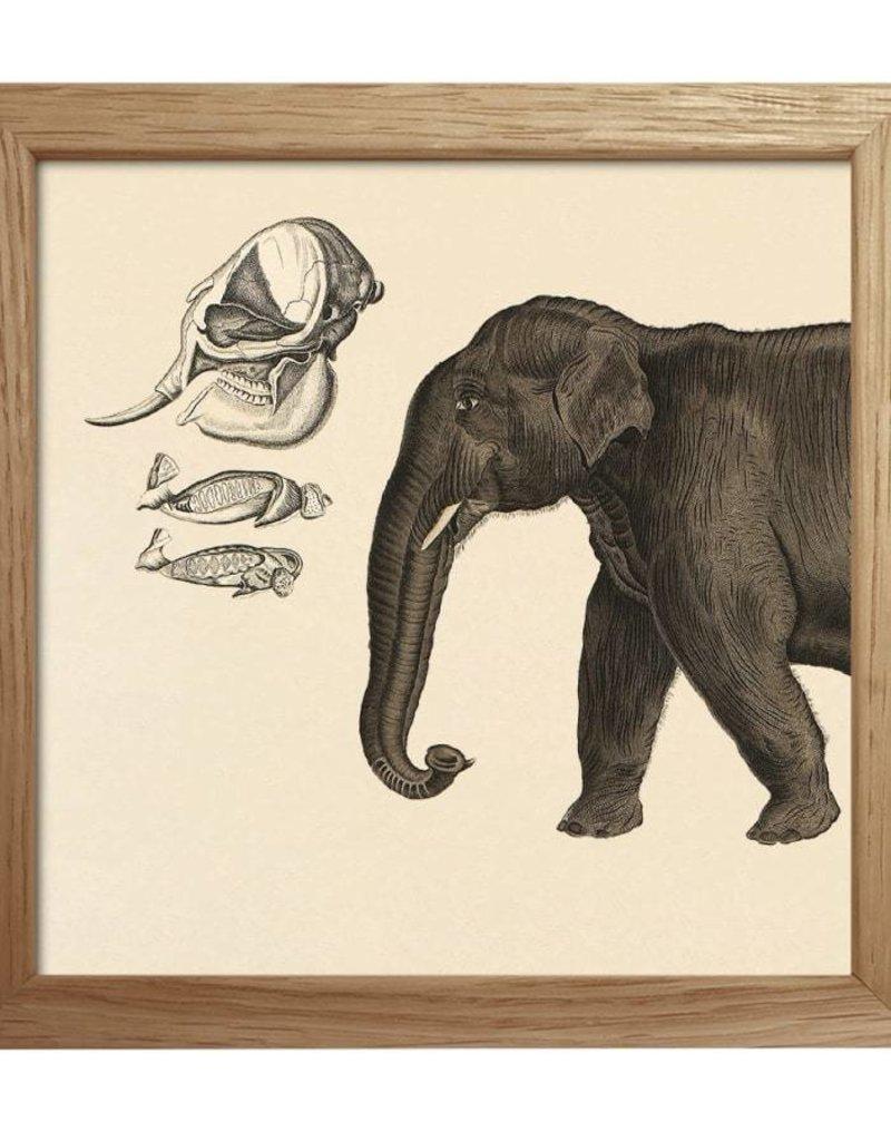 Eiken kader met voorkant olifant (15x15cm)