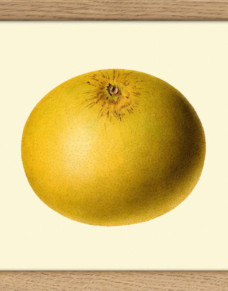 Eiken kader met  grapefruit (15x15cm)