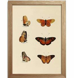 Eiken kader met diverse vlinders ( 15x21cm)