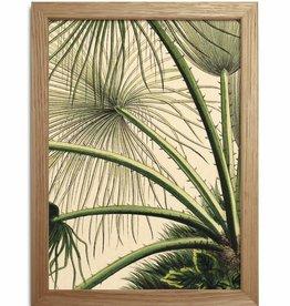 Eiken kader met vintage palmprint  ( 15x21cm)