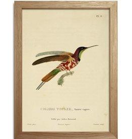 Eiken kader met kolibries ( 15x21cm)