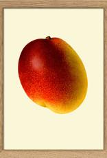 Copy of Eiken kader met opengesneden avocado ( 15x21cm)