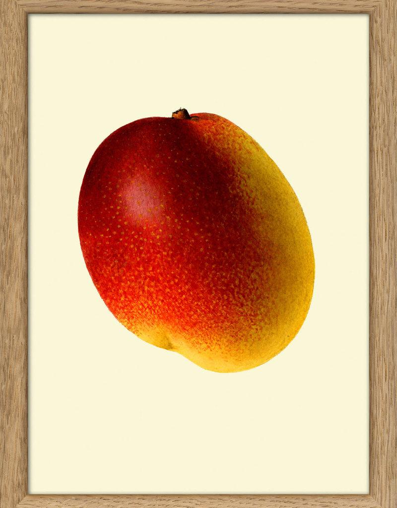 Eiken kader met mango ( 15x21cm)