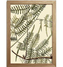 Copy of Eiken kader met exotisch blad ( 15x21cm)