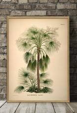 Grote eiken kader met exotische palm (112x158cm)