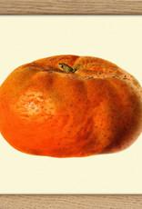 Eiken kader met  mandarijn (15x15cm)