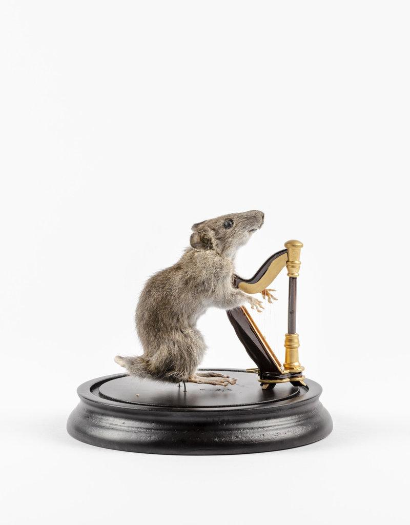 Animaux Spéciaux Rattenmuzikant met harp