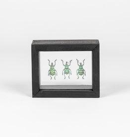 Animaux Spéciaux DOUBLE GLASS FRAME - 3x Blue Weevils