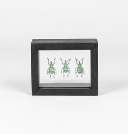Animaux Spéciaux DUBBELE GLASLIJST - 3x Blauwe Snuitkevers