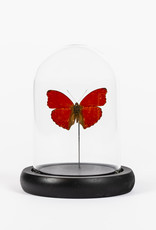 Animaux Spéciaux GLAZEN STOLPJE - Rode Vlinder