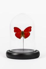 Animaux Spéciaux Stolpje met rode vlinder