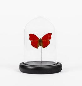 Animaux Spéciaux CLOCHE EN VERRE - Papillon Rouge