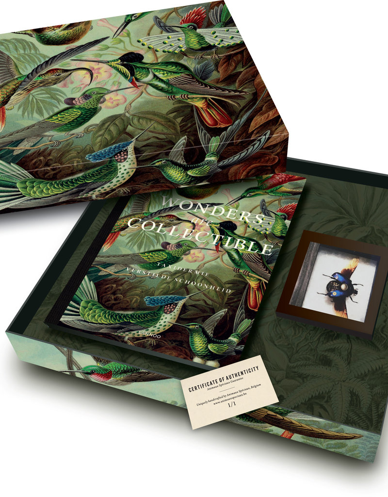 Box of Wonders - Wonders are collectible