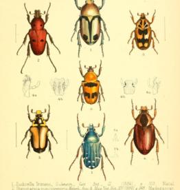 Animaux Spéciaux POSTCARD - Various Beetles