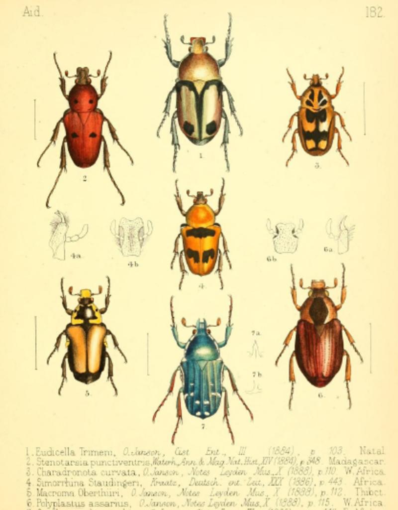 Animaux Spéciaux POSTCARD - Animaux Spéciaux - Various Beetles