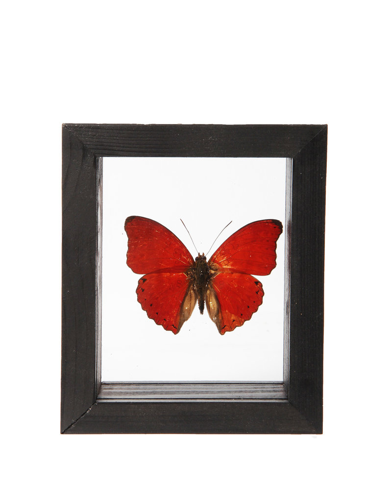 Animaux Spéciaux DOUBLE GLASS FRAME - Red Butterfly