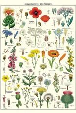 AFFICHE VINTAGE - Fleurs Sauvages (50x70cm)