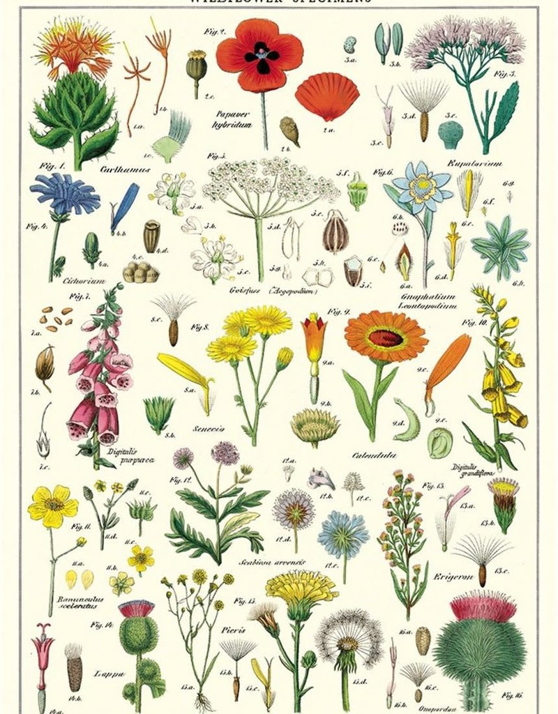VINTAGE POSTER - Wildflowers (50x70cm)