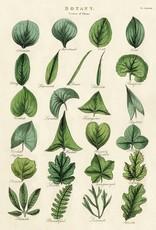 AFFICHE VINTAGE - Botanique - Feuilles (50x70cm)