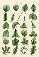 VINTAGE POSTER - Botany - Leaves (50x70cm)