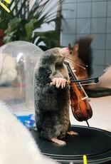 Animaux Spéciaux Stolp mol en muziekinstrument