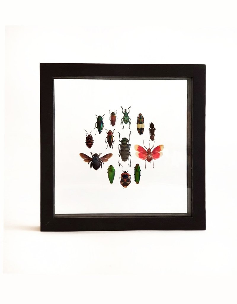 Animaux Spéciaux DOUBLE GLASS FRAME - Around the Beetles