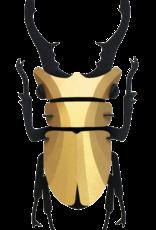 DIY DECORATION - Stag Beetle (s)