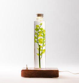 Animaux Spéciaux Gebottelde plant met lamp