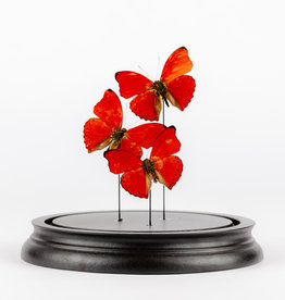 Animaux Spéciaux Copy of Stolpje met rode vlinders