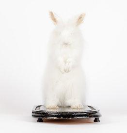 Animaux Spéciaux Opgezet konijn